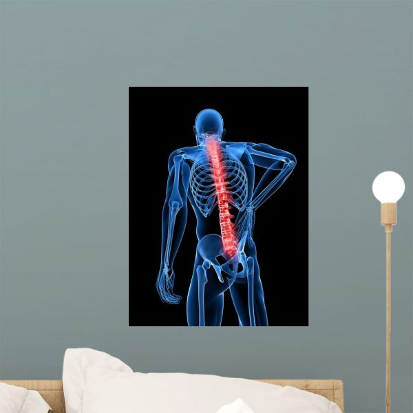 3d rendered medical x-ray wall muralwallmonkeys peel and stick